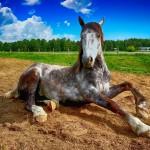 HIPOTERAPIA, czyli dlaczego warto spędzać czas z końmi?