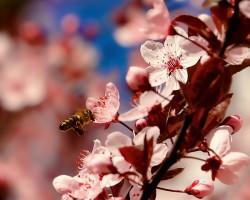 PASIEKA PEŁNA PASJI, czyli zastosowanie i właściwości zdrowotne propolisu…