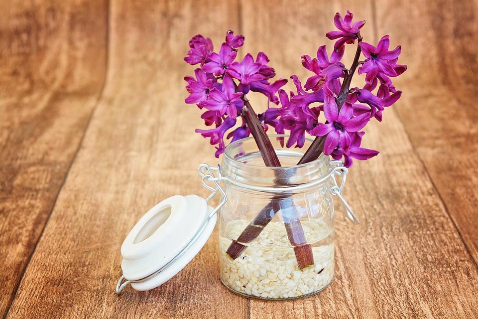 hyacinth-747131_960_720